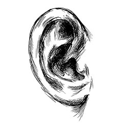 Hand sketch of the human ear vector