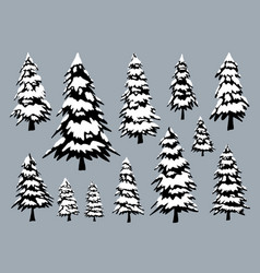 pine trees with snow in winter vector image