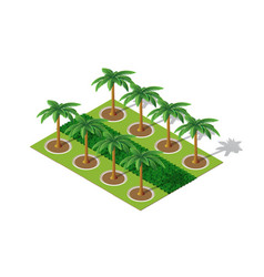 trees of a park palm vector image