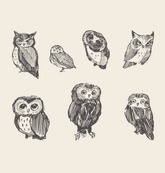 set drawn owls vintage style vector image vector image