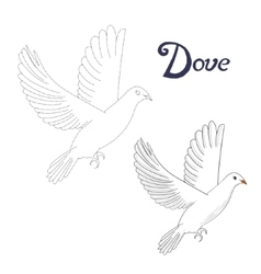 Educational game connect dots to draw dove bird vector