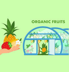 organic fruits web banner flat template vector image