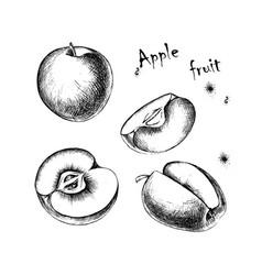 Sketch of apple fruit for design vector