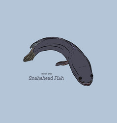Snakehead fish hand draw sketch vector