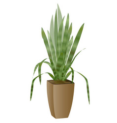 Areca palm with pot vector