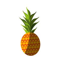 Fresh pineapple fruit vector