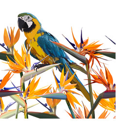 background with strelitzia reginae and parrot vector image