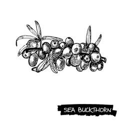 Hand drawn sea buckthorn vector