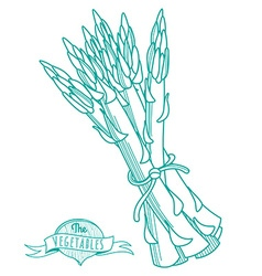 Outline hand drawn sketch of asparagus flat style vector image