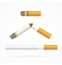 Realistic Cigarette with Traditional Filter vector image
