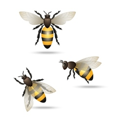 Bees icons set vector image