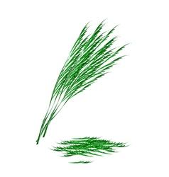 Fresh Green Acacia Pennata on White Background vector image vector image