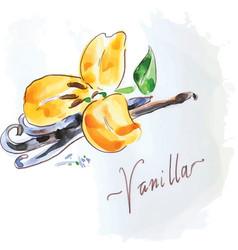 Vanilla flower of yellow color vector