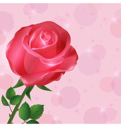 Greeting or invitation card wallpaper with rose vector image vector image