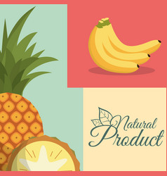 fruit nutrition natural product poster vector image