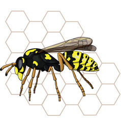 Isolated wasp vector