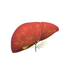 Organic green healthy liver realistic organ vector