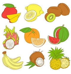 Outline hand drawn colorfull fruit set flat style vector
