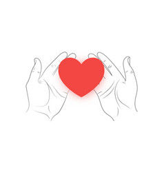 Red heart in hands on a white background vector