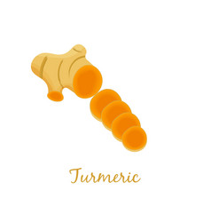 turmeric root organic spice slices herbal food vector image