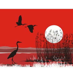 Herons on shore vector image vector image
