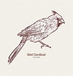 Northern cardinal cardinalis cardinalis vector