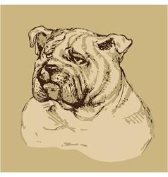 Bulldog head - hand drawn -sketch in vintage style vector image vector image