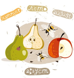 apples and pears summer vector image