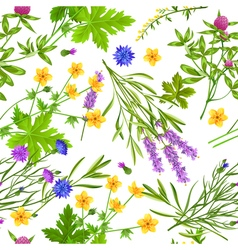 Herbs And Wild Flowers Seamless Pattern vector image