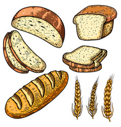 set bread in engraving style design element vector image