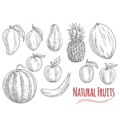 Sketch of fresh fruits for food and drink design vector image vector image