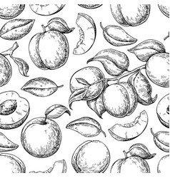 Apricot seamless pattern drawing hand vector
