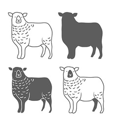 Domestic Animal Sheep vector image