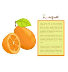 Kumquat exotic juicy fruit citrus poster vector