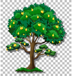 Lemon tree on transparent background vector
