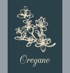 Oregano on black background vector
