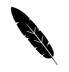 Beauty and exotic feather vector