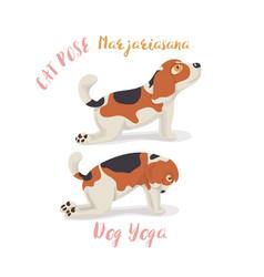 cute cartoon beagle dog in yoga pose meditationa vector image