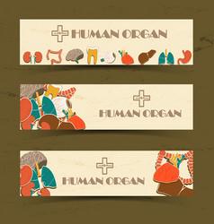 human organs banners set vector image