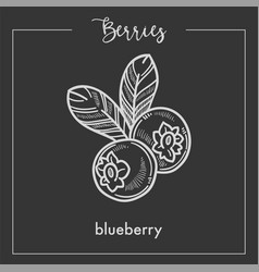 Tasty blueberry with leaves monochrome berry sepia vector