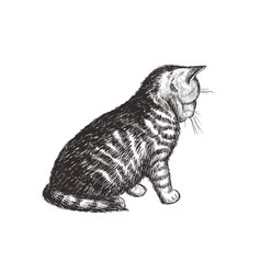 the kitten is sitting cat sketch hand drawing vector image