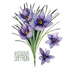 Watercolor saffron flowers vector