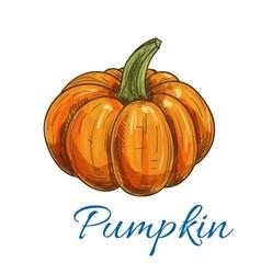 Orange autumn pumpkin vegetable sketch vector image vector image