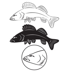 Bass fish vector image