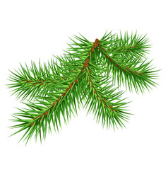 green pine branch on white background vector image