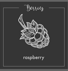 sweet ripe delicious raspberry monochrome berry vector image
