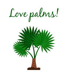 Washingtonia palm tree poster vector
