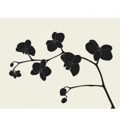 orchid branch silhouette vector image vector image
