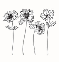 anemone flower drawing vector image