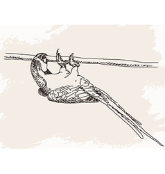 Sketch of parrot vector image